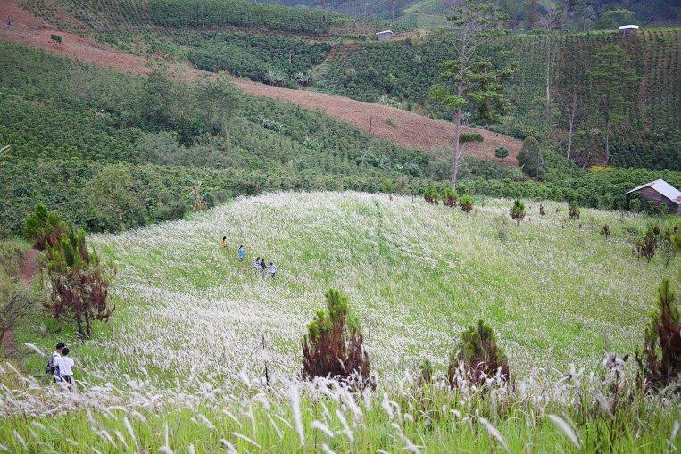 Cô dâu chú rể thả mình vào thiên nhiên giữa cánh đồng cỏ lau.