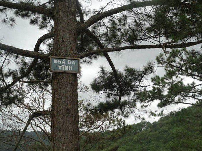Đã đến với Ma Rừng Lữ Quán thì phải ghé qua Ngã Ba Tình.