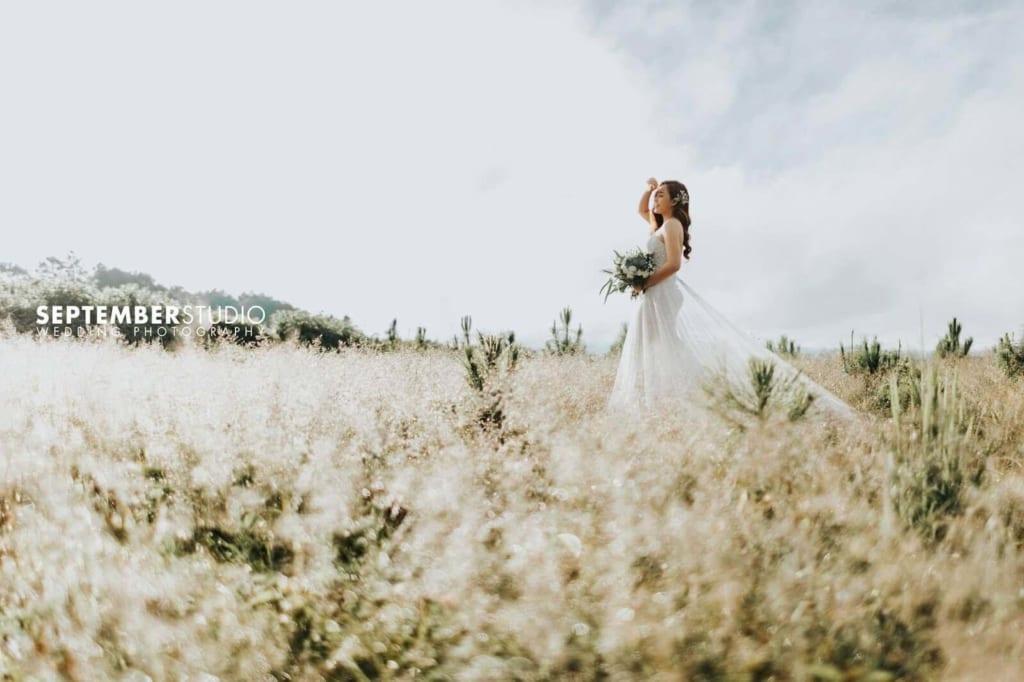 Chụp ảnh cưới giữa cánh đồng hoa theo hướng bình dị.