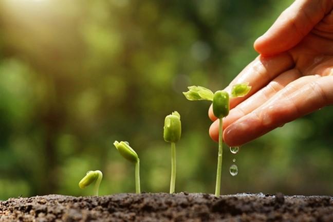 Tình yêu thương như mảnh đất màu mỡ nuôi dưỡng mọi tâm hồn